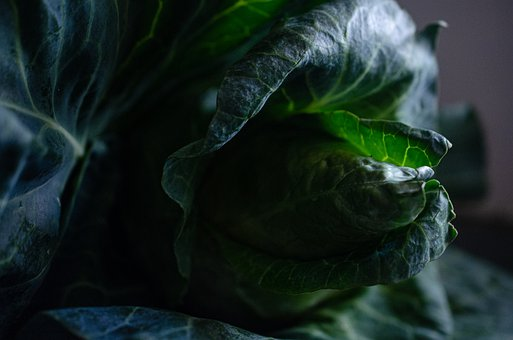 Cabbage, Vegetable, Health, Garden, Green, Raw, Crop