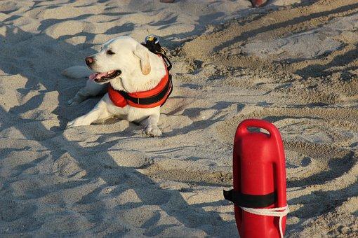 Labrador, Dog, Rescue, Beach, Lifeguard, Baywatch, Sea