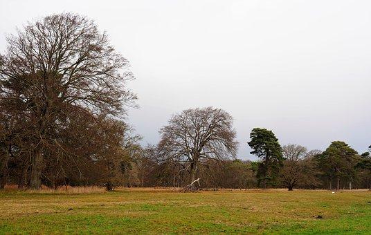 Landscape, Nature, Trees, Meadow, Green, Winter, Bald