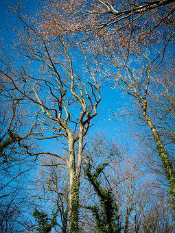 Trees, Winter, Leaves, Sky, Winter Forest, Kahl