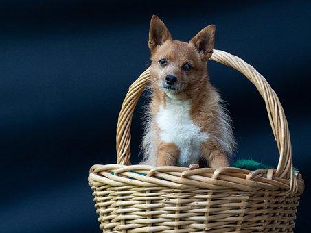 Mammal, Fur, Race, Doggy Style, Cute, Charming, Dogs