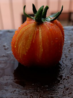 Vegetable, Multicoloured Tomato, Nature