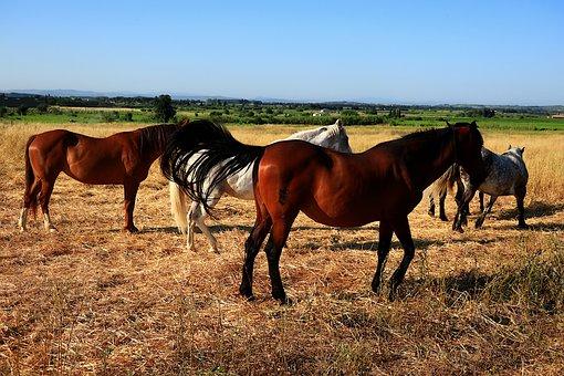 Animals, Horses, Nature, Equine, Freedom, Pastures