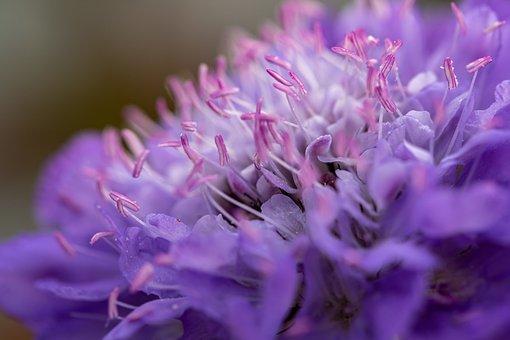 Plant, Bee, Nature, Pollen, Hummel, Pollination, Summer
