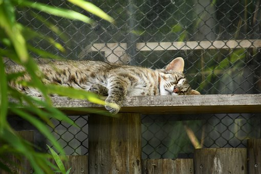 Cat, Animal, Sleep, Relax, Rest, Cute