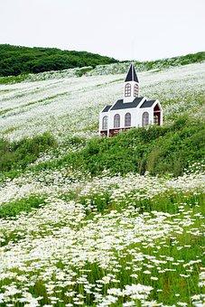 Shasta Daisy, Mountain, Summer, Nature, Flower, Green