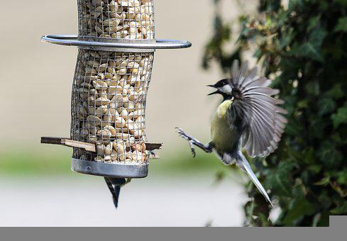 Tit, Food, Approach, Bird Seed, Plumage, Blue Tit