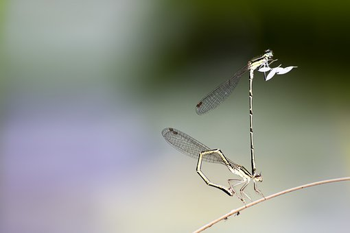 Dragonfly, Insects, Wing, Macro, Nature, Green, Summer