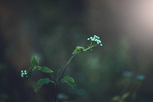 Flowers, Moody, Moody Green
