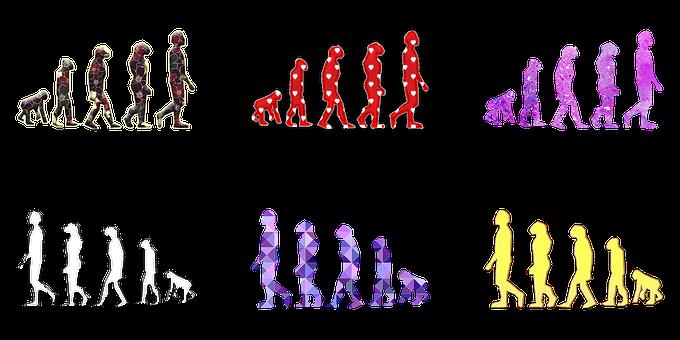 Human Evolution, Human Evolution Illustration