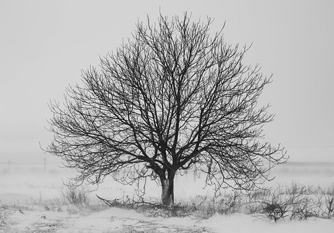 Tree, Snow, Black And White, Winter, Nature, Landscape