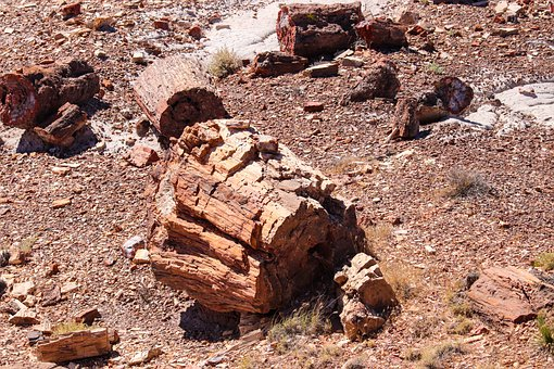 Petrified, Forest, Arizona, Usa, Landscape, Nature