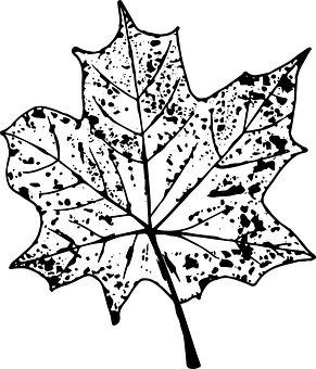 Autumn, Sheet, Imprint, Black, Leaves, Nature, Maple
