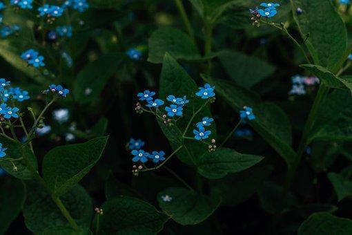 Flowers, Bloom, Spring, Small Flowers, Blue Flowers