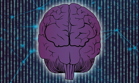 Brain, Technology, Network, Information