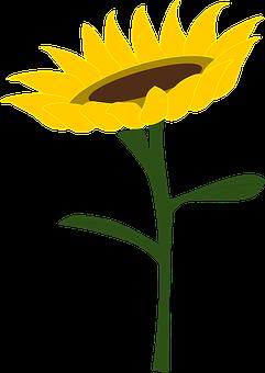 Sunflower, Honey, Sunflower Field, Summer, Plants, Wind
