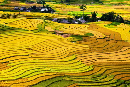 Terraced, Fields, Cang, Chai, District, Yen, Bai