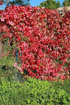 Fall, Foliage, Nature, Leaves, Autumn Landscape, Light
