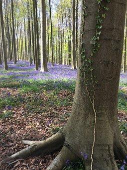 Hyacinth, Ten, April, Forest, Tree, Trunck, Flowers