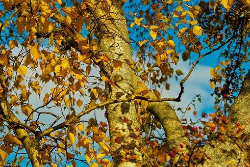 Autumn, Leaves, Leaves In The Autumn, Golden Autumn