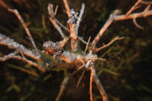 Branch, Nature, Garden, Tree, Landscape, Dry Twigs