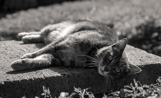 Cat, Animal, Pet, Vlack And Black, Outdoors