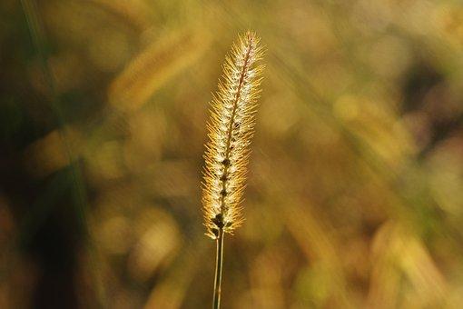 Grasses, Nature, Plant, Green, Grass, Filigree