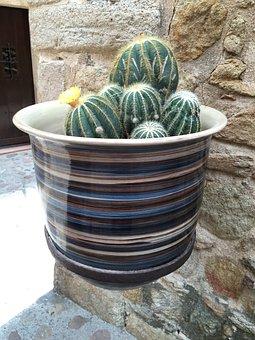 Cactus, Pottery, Garden