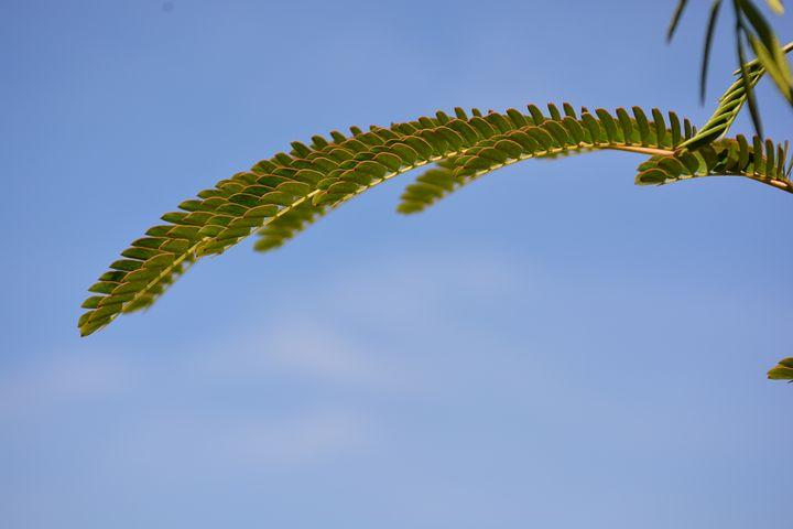 Leaf, Twig, Sky, Blue, Cloud, Green, Harmony, Maunsell