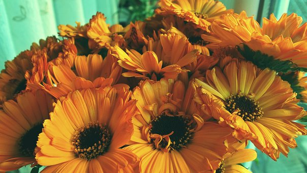 Gerbera, Bouquet, Flowers, Yellow, Photo, Orange