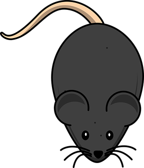 Mouse, Rodent, Black, Animal, Cute, Rat