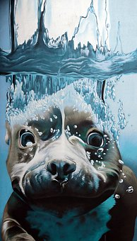 Graffiti, Robbe, Seal Under Water, Diving, Underwater