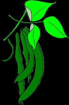 Beans, Leguminous Plants, Pulse, Legumes, Garden