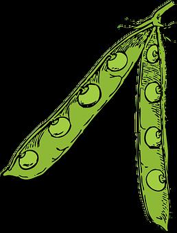 Peas, Legumes, Leguminous Plants, Vegetables, Healthy
