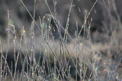 Nature, Plants, Closeup, Macro Photography, Frost