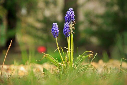 Purple, Flower, Green, Bloom, Blossom, Garden, Nature
