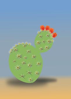 Cactus, Desert, Dry, Summer, Sand, Plant, Prickly