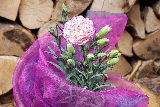 Carnation, Pink, Pink Carnation, Mini Carnations, Bloom