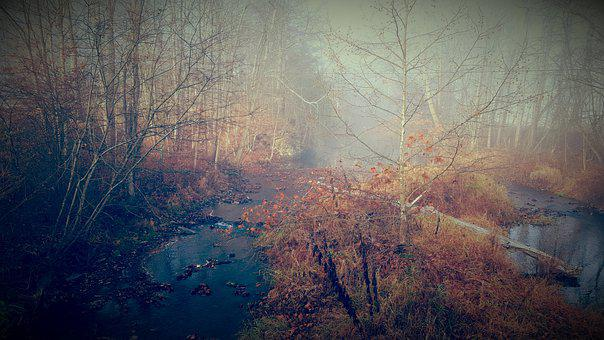 Fall, Leaves, Water, Creek, Autumn, Nature, Colorful