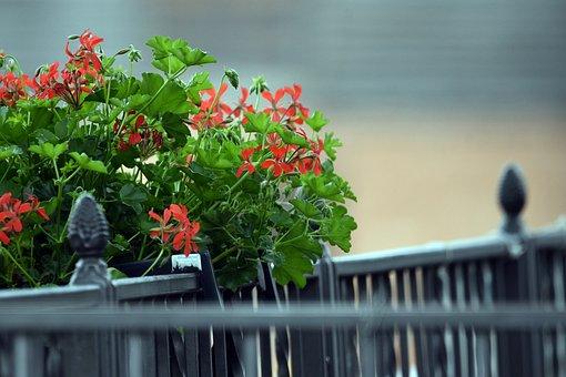 Flower Pot, Flower, Flowers, Spring