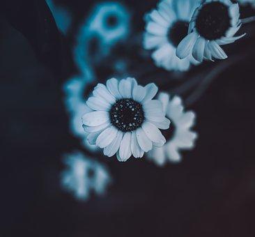Flower, Nature, Spring, Pink, Summer, Zen, Plants