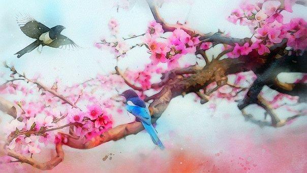 Flower, Plant, Peach Blossom, Wallpaper, Hd, Desktop