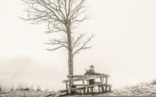 Tree, Bench, Park, Nature, Lake, Landscape, Outdoors