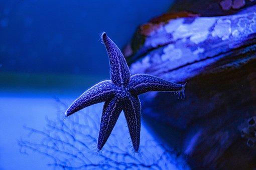 Starfish, Blue, Sea, Ocean, Nature, Water, Tropical