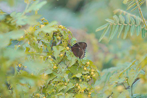 Butterfly, Green, Grass, Wild, Insect, Spring, Wing