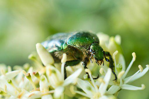 Beetle, Green, Panzer, Insect, Colorful