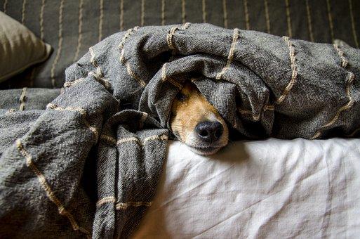 Dogs, Animals, Dog, Pets, Mammals