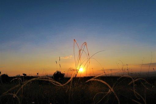 Sunset, Herbs, Daylight, Nature