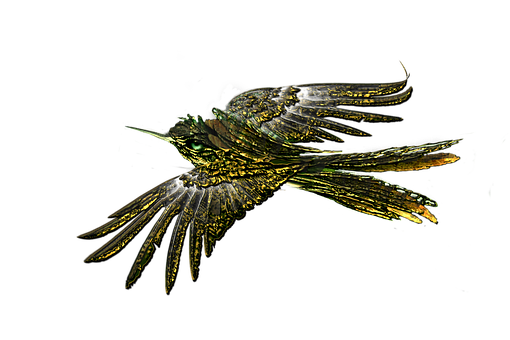 Bird, Flying Bird, Transparent, Animal, Wing, Freedom