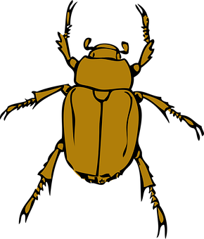 Beetle, Stink, Bug, Insect, Legs, Outdoors, Biology